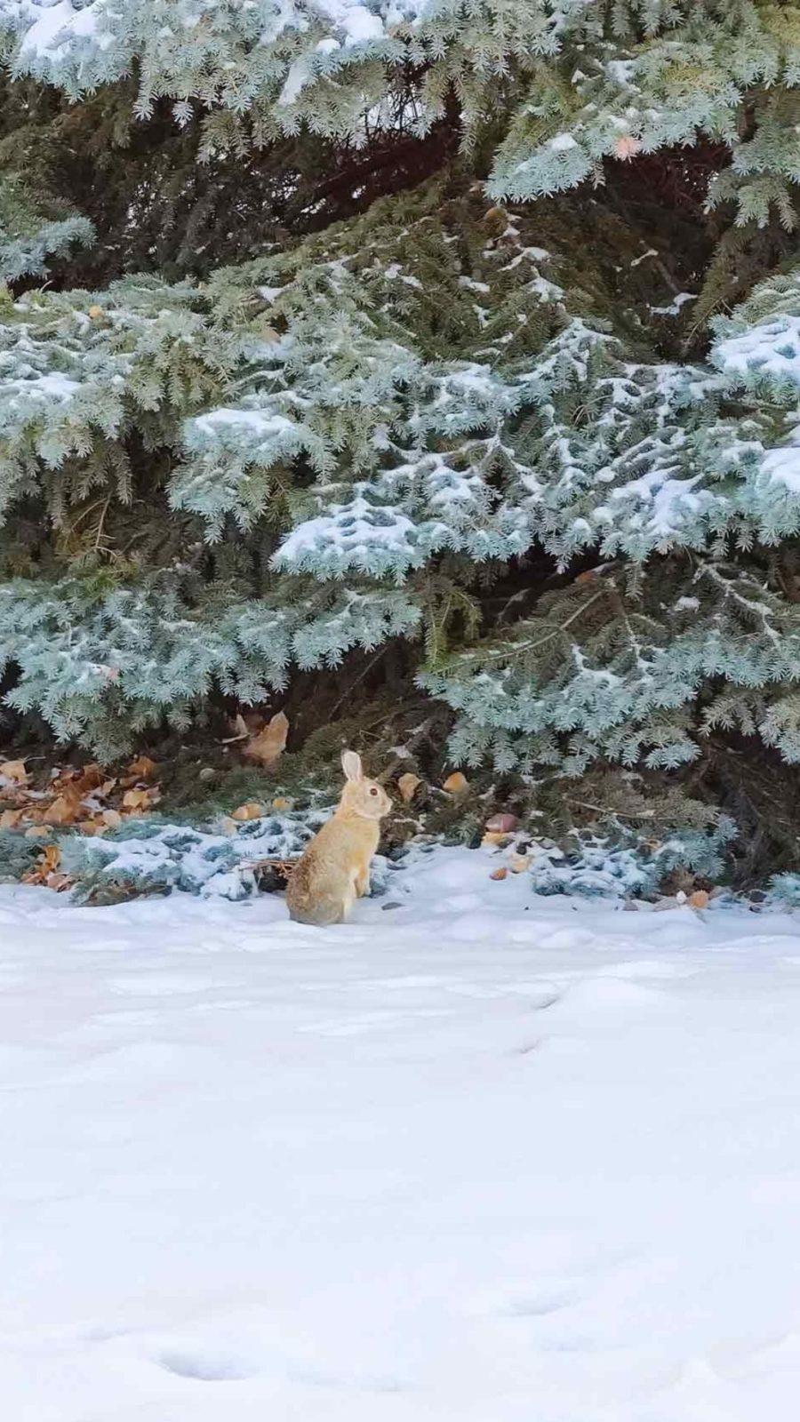 Fond ecran - Winter in Boulder